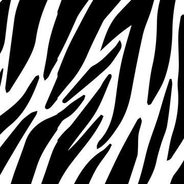 Immagine di Zebra